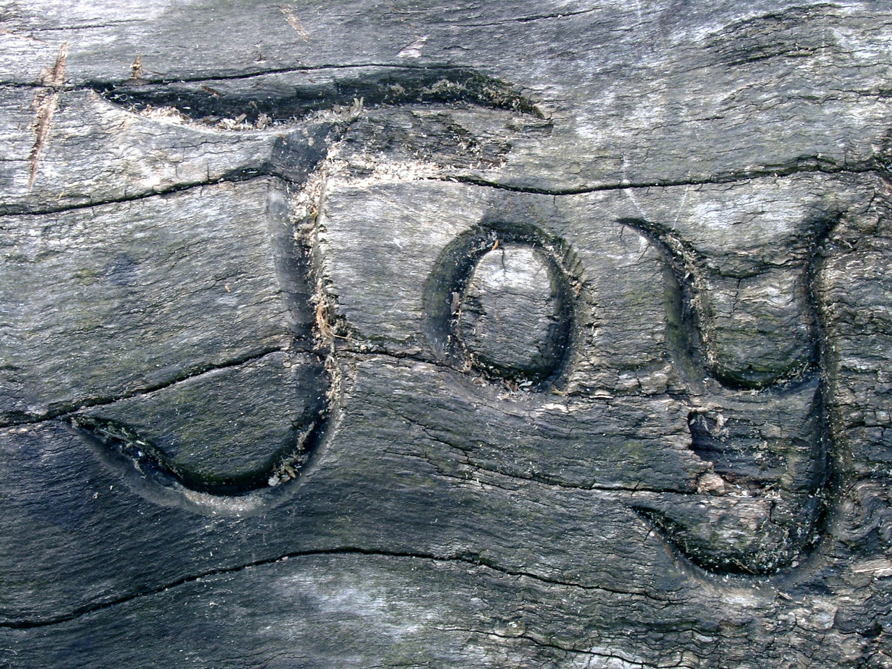 Carving on a log bench at Moseley Bog, Birmingham, UK. Photo by Ian Cuthbert.